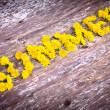 Постер, плакат: Yellow dandelions forming word SUMMER