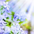 Stock Photo: Spring background