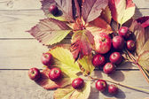 Autumn leaves and apples texture — Stock Photo