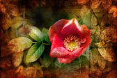 Dog rose blossoms — Stockfoto