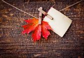 Autumn leaf and vintage paper — Foto de Stock