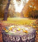 Fundo com carimbo e folhas de outono — Fotografia Stock
