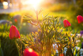 Beautiful tulips and green plant — Stock Photo