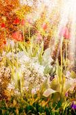 Beautiful tulips in grass — Stock Photo