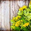 Yellow flowers background — Stock Photo