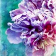 Purple peony — Stock Photo