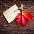 Autumn leaf and old paper — Stock Photo