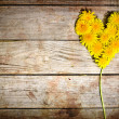 Dandelions heart — Stock Photo