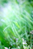 Erba verde in un giorno d'estate — Foto Stock