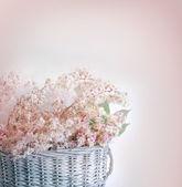 盛开的板栗 — 图库照片