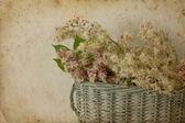 Chestnut in basket — Stock Photo