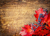 Autumn leaves and berry — Stock Photo