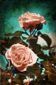 Vintage roses — Stock Photo