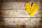 Dandelions heart — Stock Photo