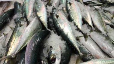 Makrely na trhu — Stock video