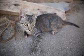 Zaprawa murarska kotek rocznika portret — Zdjęcie stockowe