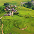 Rice plantation - Foto Stock