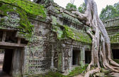 Trees in Ta Prohm, Angkor Wat — Stock Photo