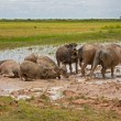 Water buffalos — Foto de Stock