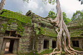 Trees in Ta Prohm, Angkor Wat — Fotografia Stock