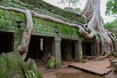 Trees in Ta Prohm, Angkor Wat — Stockfoto