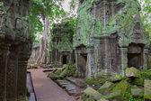 Trees in Ta Prohm, Angkor Wat — Stock Photo