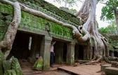 Ta 普仑和树在吴哥窟 — 图库照片