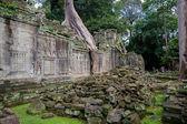 Tree in Angkor Wat — Stock Photo