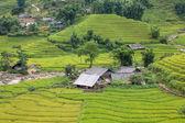 Rice plantation — Stock Photo