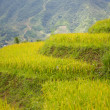 Rice terraces — Foto Stock #14889607