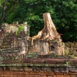 Tree in Angkor Wat - Foto Stock