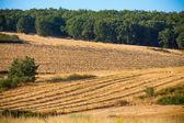Tarwe oogst, velden en landschappen — Stockfoto