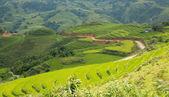 Rice plantation hill — Stock Photo