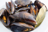 Boiled mussels — Stock Photo
