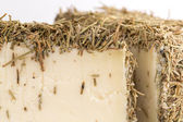 Spiced Cheese — Stock Photo