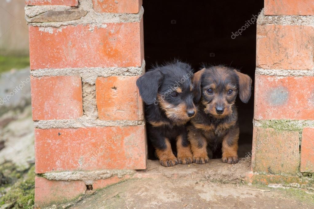动物在家里温馨图片