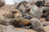 Sea Lions sleeping — Stock Photo