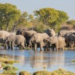 Elephants in Etosha — Stockfoto #31693029
