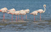 Flamingos over the water — Stock Photo