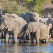 Elephants in Etosha — Photo