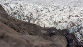 Svinafellsjokull in Iceland — Stock Photo