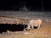 Rhino at waterhole — Stock Photo