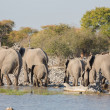 Foto Stock: Elephants in Etosha