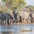 Elephants in Etosha — Foto de stock #39299005