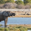 Elephants in Etosha — Foto de stock #39826129