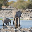 Elephants in Etosha — Stockfoto #39892775