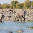 Elephants in Etosha — Stockfoto #39962829
