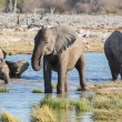 Elephants in Etosha — Foto de stock #40347683