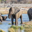 Elephants in Etosha — Stockfoto #40347683