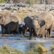 Elephants in Etosha — Foto Stock #40457581
